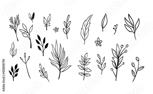 Hand drawn floral elements. Swirls, laurels, arrows, leaves, flowers and branches. Doodle botanical elements. - fototapety na wymiar