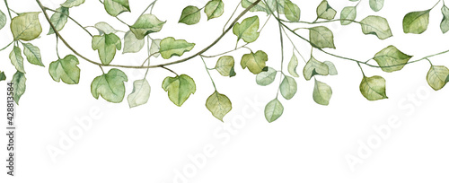 Seamless banner with green leaves. Watercolor hand painted botany - fototapety na wymiar