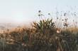 Sommerbergwiese im Allgäu zum Sonnenuntergang