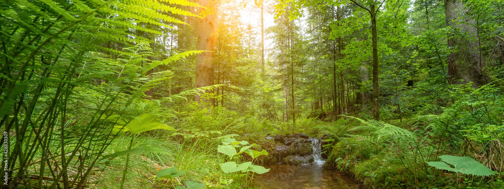 Fototapeta Forest landscape panorama background banner - green fresh plants in the forest (fern, grass, meadow, trees) and small river