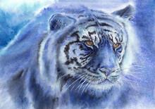 Blue Tiger Portrait Closeup. Symbol Of 2022 Year