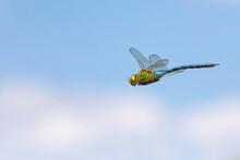 .Große Königslibelle Im Flug