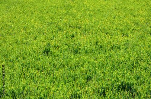 background texture of a grassy field in the bush - fototapety na wymiar