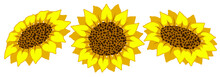 Sunflower Flower Vector Flat Isolated Colorful Set