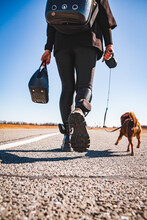 Man And Dog On The Road