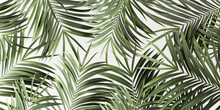 Green Palm Leaves On White Abstract Summer Background 3D Rendering, 3D Illustration