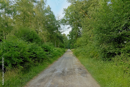 Fototapeta Hiking path surrounded by shrubs and trees in the French countryside on a sunny
