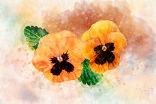 Close-up Of Orange Pansy Flowers In Watercolor. Botanical Illustration For Greeting Card.