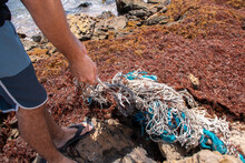 A Man Cleaning Up A Pile Of Tangled Turquoise And White Rope Ghost Fishing Nets, Abandoned Gear Washed Up Among A Carpet Of Sargassum Seaweed In Bathsheba, Barbados.