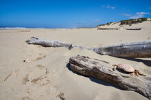 Deserted Oregon Beach With Dead Tree And Crab