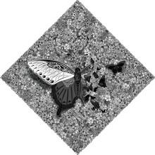 Butterflies At Flowers