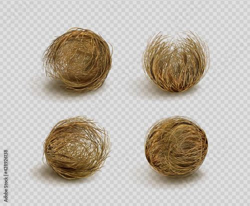Fototapeta Tumbleweed, dry weed ball isolated on transparent background. Vector realistic set of western desert dead plants, rolling dry bushes, old tumble grass in prairie obraz