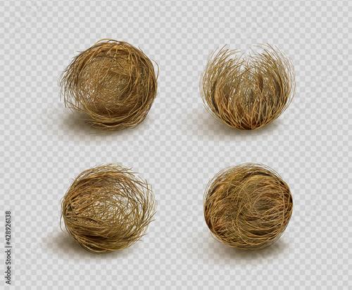 Fotografie, Obraz Tumbleweed, dry weed ball isolated on transparent background