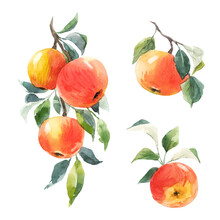 Beautiful Set With Hand Drawn Watercolor Tasty Summer Red Apple Fruits. Stock Illustration.