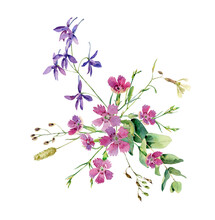 Watercolor Wild Forest Flowers On White Background