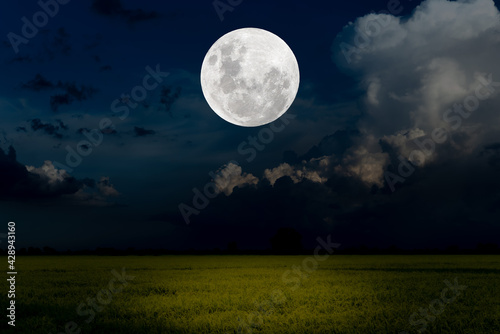 Fototapeta Full moon over rice paddy field in the night.