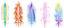 Fluffy Multicolored Exotic Bird Feathers Set Isolated On White Background