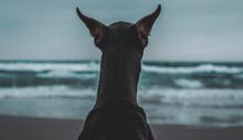 Sea on A Foggy Day, Doberman At Sea, Dog