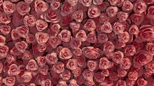 Bright Flowers Arranged To Create A Pink Wall. Elegant, Romantic Background Formed From Colorful Roses. 3D Render