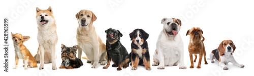 Billede på lærred Group of different cute dogs on white background. Banner design