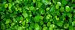 Leinwandbild Motiv closeup nature view of colorful leaf background. Flat lay, nature banner concept, tropical leaf