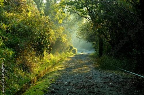 Fotografie, Obraz 晴れた日の朝の山道