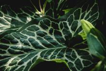 Feuille, Panaché, Vert, Foret, Sous Bois, Nature, Nervure, Ombre, Plante
