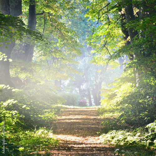 Slika na platnu Single lane rural gravel road through the tall green linden trees
