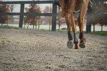 Canter Horse Step In Outdoor Arena In Winter