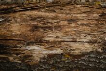 Brown Tree Bark Texture Background