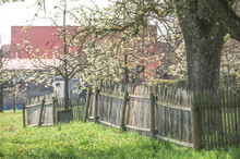 Obstbaumblüte In Ländlicher Umgebung