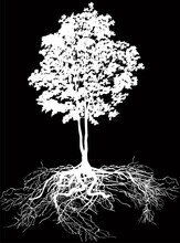 Lush Tree With Root Isolated On Black