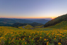 Tree Marigold Or Yellow Flowers In National Garden Park And Mountain Hills In Mae Hong Son, Thailand. Nature Landscape In Travel Trip And Vacation. Thung Bua Tong At Doi Mae U Kho.