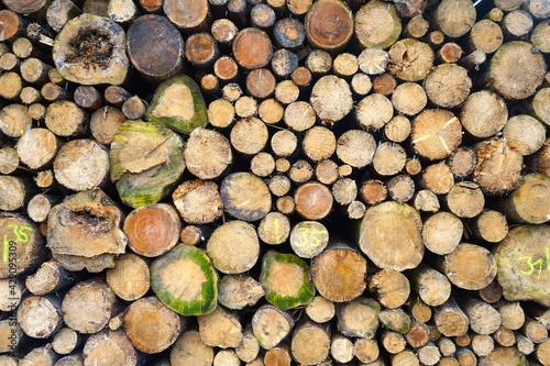 Zu einem Polter aufgehäufte Baumstämme, Forstwirtschaft, Dürre, Waldsterben, Kli Wallpaper Mural