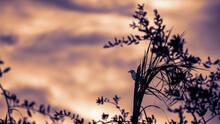 Sunset Blue Jay