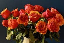 Orange Roses On Black Background