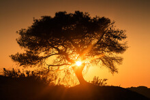 Beautiful Lone Tree Greets Sunrise Surrounded