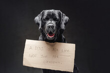 Black Retriever And Cartoon Sign With A Slogan Concept In Studio