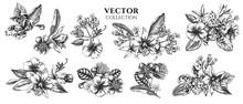 Flower Bouquet Of Black And White Laelia, Feijoa Flowers, Glory Bush, Papilio Torquatus, Cinchona, Cattleya Aclandiae