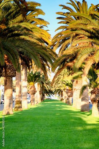 Palmowy gaj - fototapety na wymiar