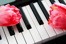 White And Black Piano Keys And Pink Flowers