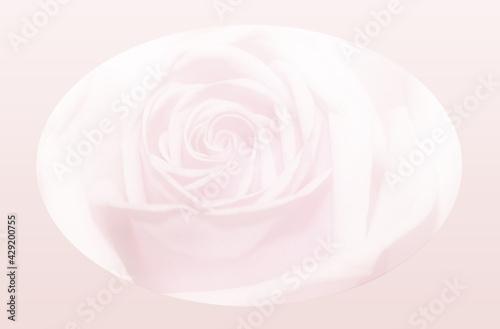 Blick in die Blüte einer Rose Fototapeta