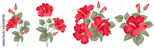 Set of differents hibiscus on white background. - fototapety na wymiar