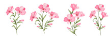 Set Of Differents Alstroemeria Flowers On White Background.