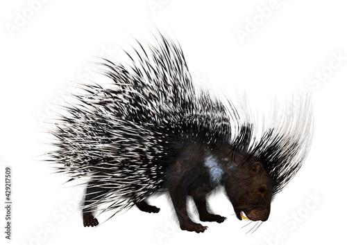 Fototapeta 3D Rendering Crested Porcupine on White obraz