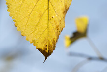 Closeup Shot Of An Autumn Leaf Isolated On Bright Sky Background