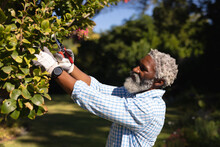 Smiling African American Man Cutting Tree Branches In A Sunny Garden