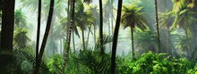 Rainforest In The Fog, Jungle In The Morning In The Haze, Palm Trees In The Fog