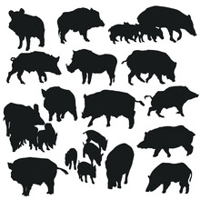Wild Pig Illustration Clip Art Design Collection Silhouettes Animal Vector Clipart.