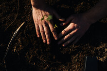 Planting A Plant In Soil